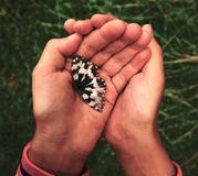 Children's hands holding a butterfly in the open air Royalty Free Stock Image