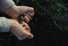 Children's hands holding seeds. Royalty Free Stock Images