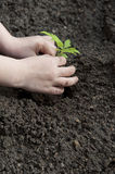 Children's hands and little plant Stock Images