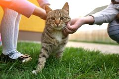children`s hands stroking the cat close-up royalty free stock image