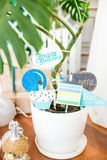 The children`s holiday is decorated with blue balloons, seashells, and green plants, a beautiful candy bar with a blue cake. For a small birthday in a marine Royalty Free Stock Images