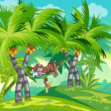 Children's illustration of the jungle with a sleeping monkey Royalty Free Stock Image