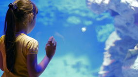 Children`s impressions of the underwater world and its inhabitants stock footage