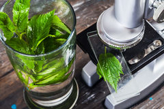 Children's microscope in still life table leaves, plant, foliage, biology Stock Photos