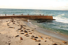 Children`s Nursery for Sea Lions in La Jolla, California Royalty Free Stock Image