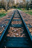 Autumn leaves on sleepers for train royalty free stock photography