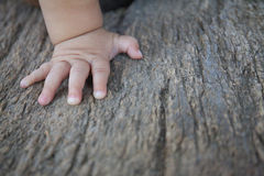 Children's right hand is located on an old stump Stock Images