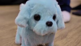 Children`s soft toy clockwork dog, funny moves on the floor, close-up. Children`s soft toy clockwork dog, blue, comes in and out of focus, funny moves on the stock video