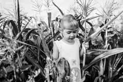 Children`s walk in corn. the girl in the corn. adventures royalty free stock photos