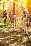 Children scouts explore the beautiful forest Royalty Free Stock Images