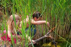 Children in sedge stock photos