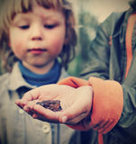 Children see a toad found in the forest Stock Photo