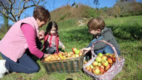 Children and senior woman putting apples inside of stock video