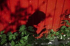 Children shadow on the wall royalty free stock images