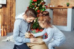 Children, sister take out a dog gift for Christmas. The concept stock photography
