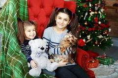 Children sit on a large chair. Little dog and toy bear. The concept of Christmas and New Year. stock photo