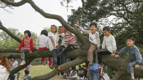 Children sitting on a big tree,in the park,chengdu,china Royalty Free Stock Images