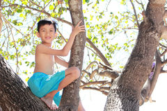 Children sitting on a branch of a tree Royalty Free Stock Images