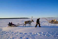 Children in sleigh pulled by reindeer. Royalty Free Stock Photos