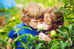 Children smelling bouquet of peonies, sun back lighting. Toning Stock Photography