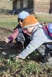 Children in spring nature with snowdrops. Children picking snow drops in nature in spring stock images