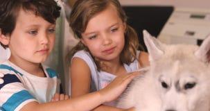Children stroking dog stock video