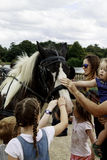 Children stroking a shire horse waiting to pull a carriage Royalty Free Stock Images
