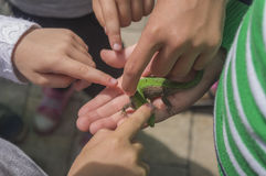 Children study a small lizard stock images
