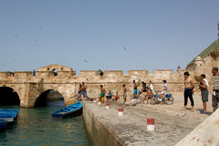Children swimming in the port of Essaouira Royalty Free Stock Images