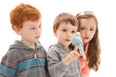 Children with tame pet budgerigar Royalty Free Stock Photography