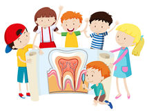 Children with tooth diagram Stock Image