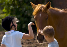 Children touch horse. Two children touching a brown horse Stock Photos