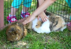 Children touching shy bunny Royalty Free Stock Photos