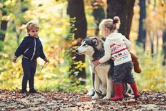 Children training dog in autumn forest. Little girl and boy friends play with husky pet in woods. Friendship and child. Love. Training dogs concept. Game, fun royalty free stock photography