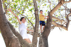 Children on the tree. Two little boy and girl playing on the tree Stock Images