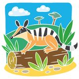 Children vector illustration of little numbat. Royalty Free Stock Image