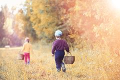Children in the village walk through the autumn forest and gathe stock images