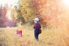 Children in the village walk through the autumn forest and gathe stock photography