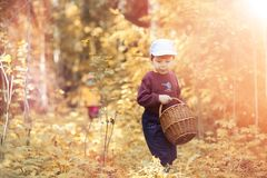 Children in the village walk through the autumn forest and gathe royalty free stock photography