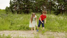 Children walk and play on flower meadow tear flowers at summer outdoor activity. stock footage