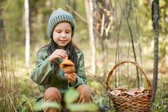 Gathering of mushrooms. Royalty Free Stock Image