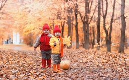 Children are walking in nature. Twilight kids are walking around. The park. Brother with sister in autumn city park leaf fall.r stock photos