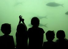 Children watch fish royalty free stock images