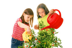 Children watering plants Stock Photos