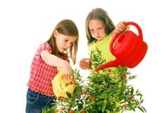 Children Watering Plants Stock Photos