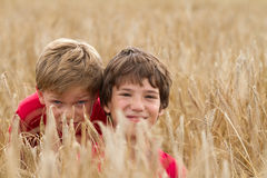 Children in a wheat field Stock Image