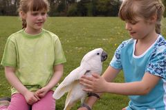 Children with a white cockatoo. Playing in the park with the bird Royalty Free Stock Image