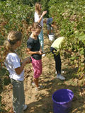 Children work in the vineyard Stock Photography
