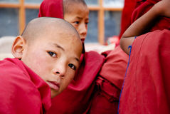 CHILDREN OF THE WORLD: Buddhist monk, Ladakh Royalty Free Stock Photo