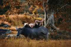 Childrens with buffalo Royalty Free Stock Photography